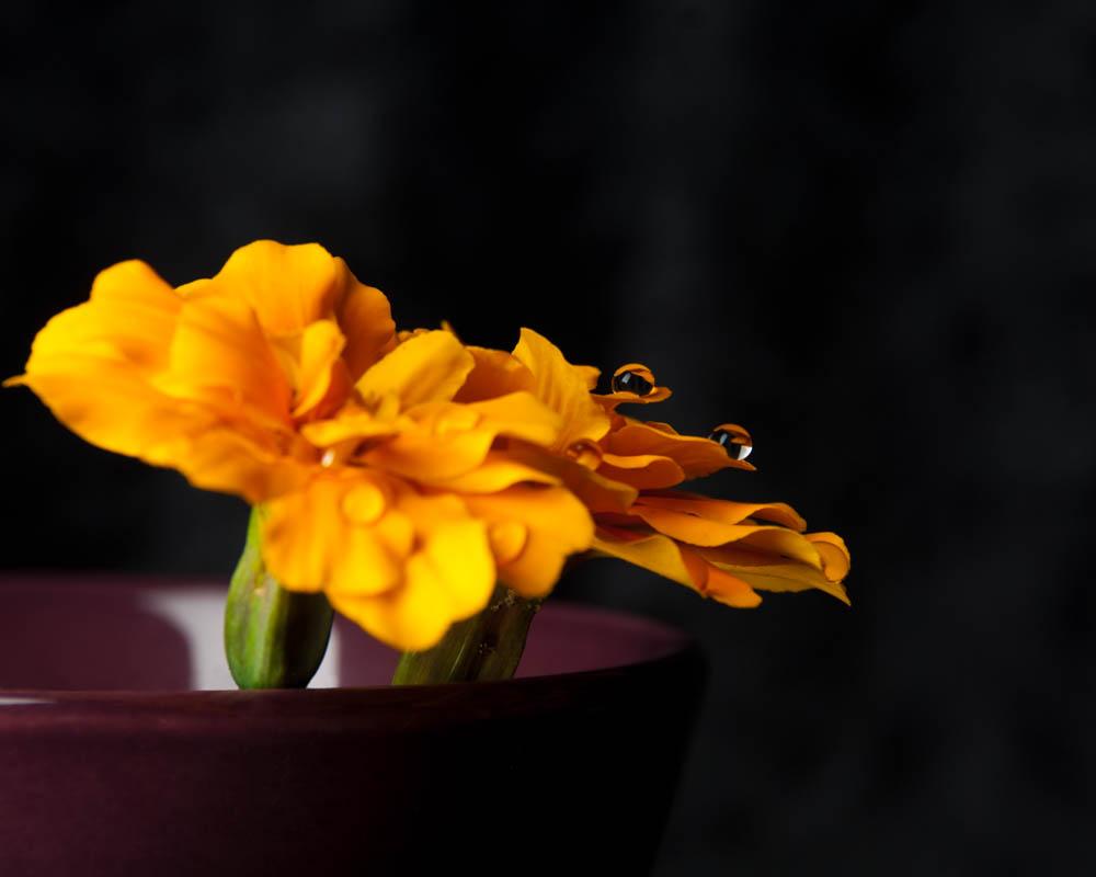 flowers2014_001