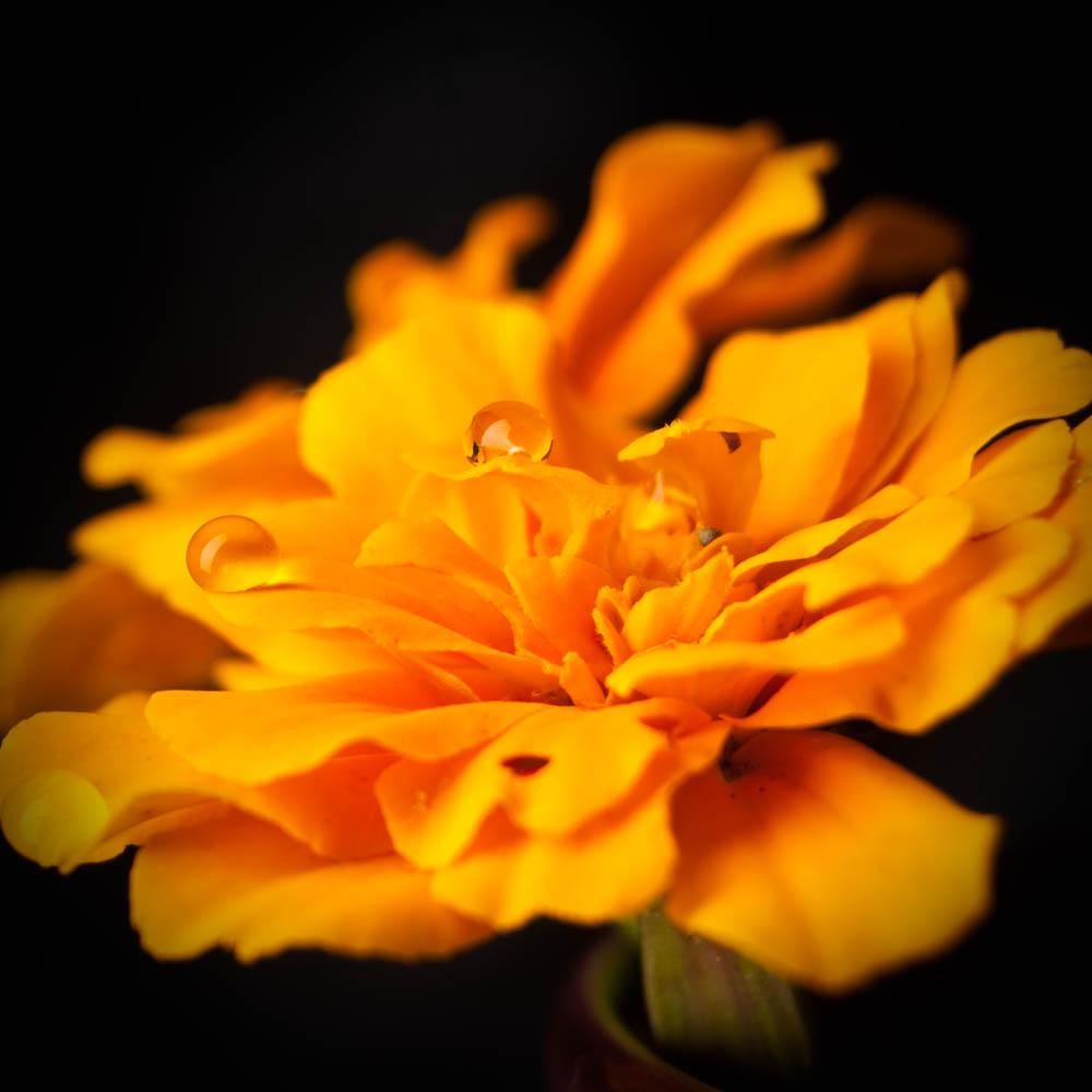 flowers2014_002