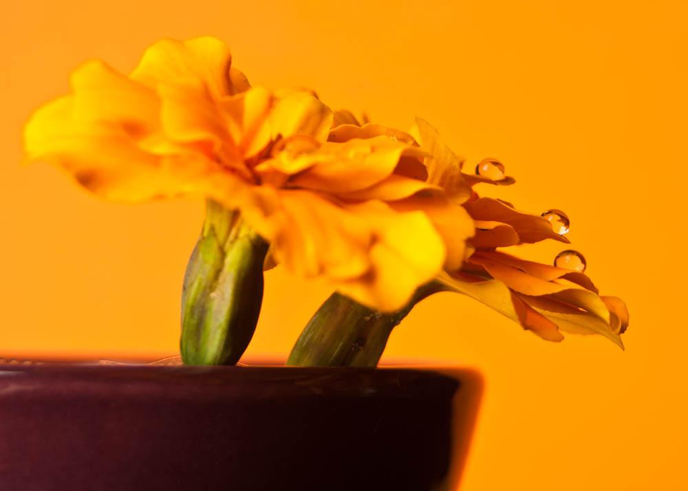 flowers2014_003