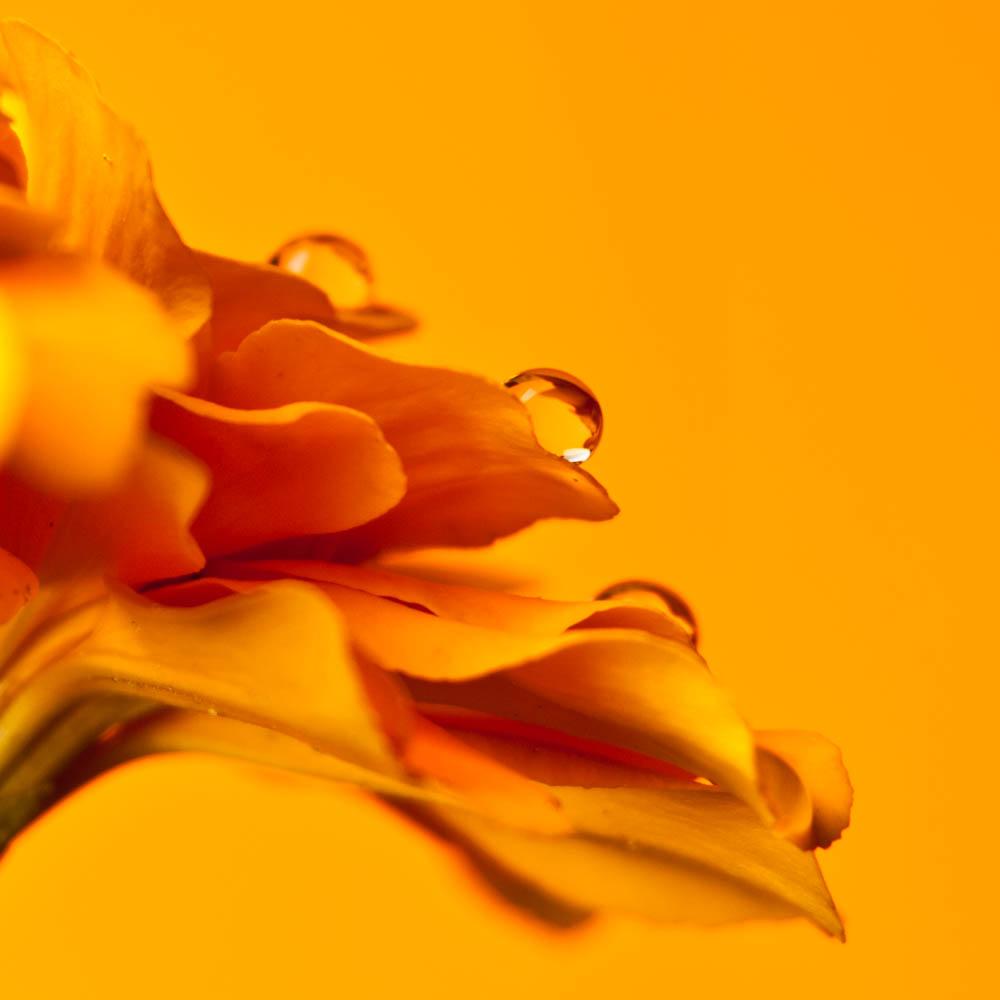 flowers2014_004