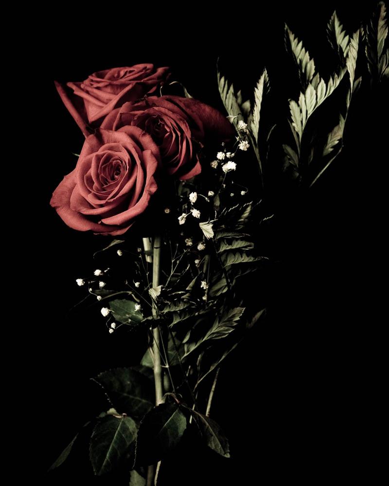 roses_001